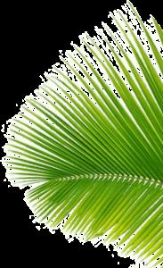 Coconut Black - prezzo - dove si compra - farmacie - Aliexpress - Amazon