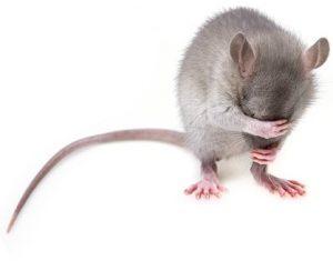 Italia - opinioni - recensioni - forum - funziona - chi l'ha provato - Pest Away Mini