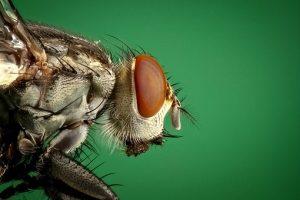 Pest Away Mini - erboristeria - come si usa - commenti