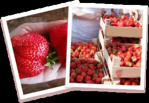 Home Berry BoxEffetti collaterali - contraindicazioni - fa male