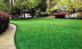 Perfect Grass - prezzo - dove si compra - Aliexpress - Amazon