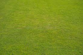 Recensioni - forum - Italia - opinioni - funziona - chi l'ha provato - Perfect Grass