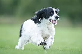 Good Doggie - farmacie - prezzo - dove si compra - Aliexpress - Amazon