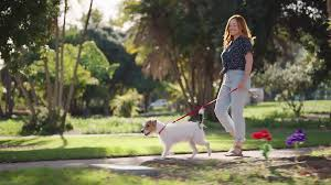 Effetti collaterali - fa male - contraindicazioni - Good Doggie