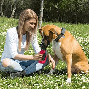 Doggy Bottle - Italia - funziona - chi l'ha provato - opinioni - recensioni - forum